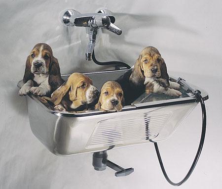 Vaskekar/Vaskerenner